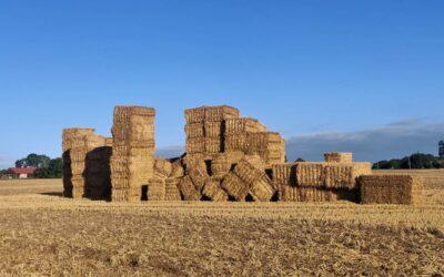 17.-18. September – Bauen mit Holz, Stroh und Lehm